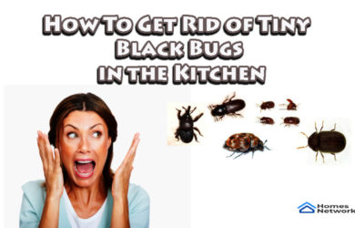 How To Get Rid of Tiny Black Bugs in the Kitchen