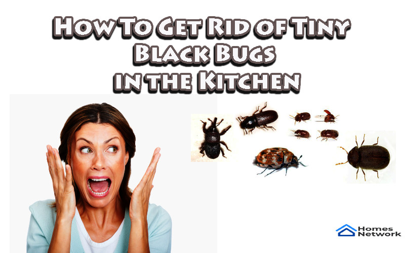 Get Rid of Tiny Black Bugs in the Kitchen