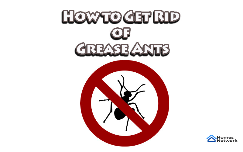 How to Get Rid of Grease Ants