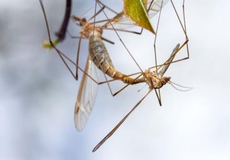 Get Rid Of Crane Flies
